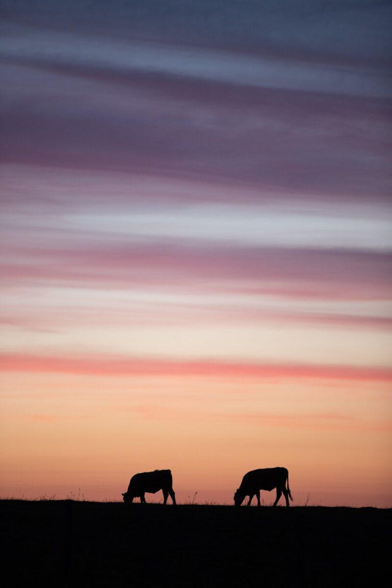 solnedgång-fotograf-skåne