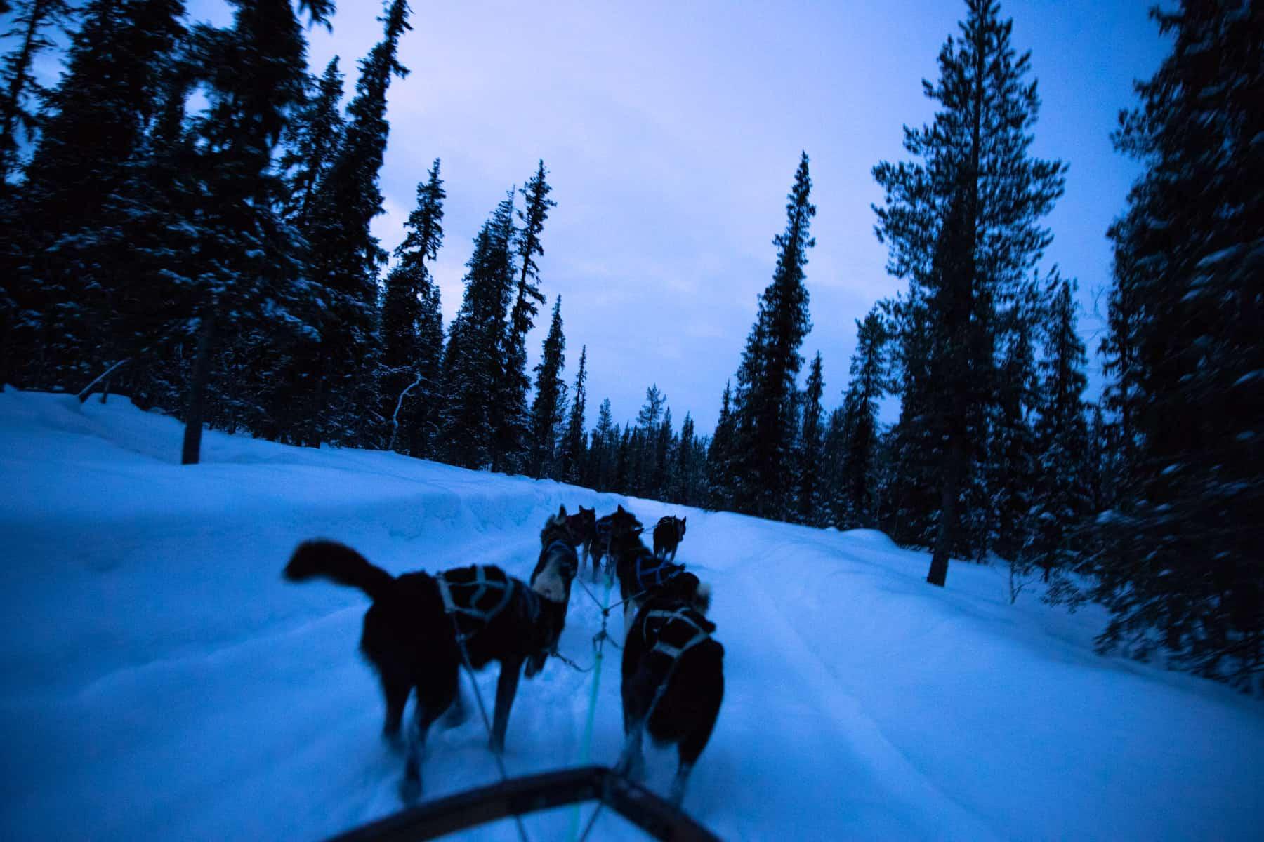 dogsled-adventure-elopement-s