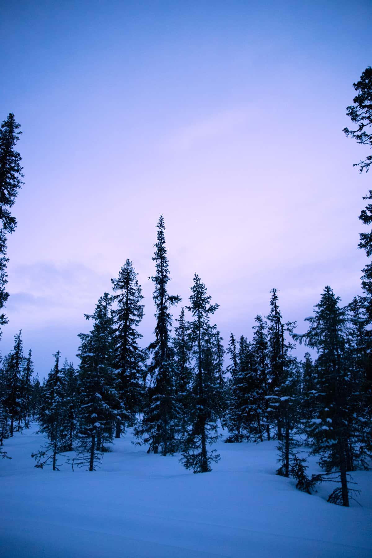 nordic-winter-evening